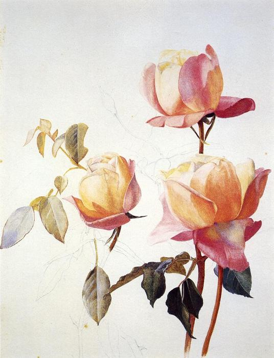 Florentine Roses, Watercolour by Henry Roderick Newman (1833-1918, United States)