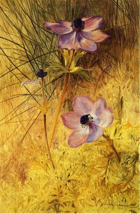 Florentine Wild Anemones, Watercolour by Henry Roderick Newman (1833-1918, United States)