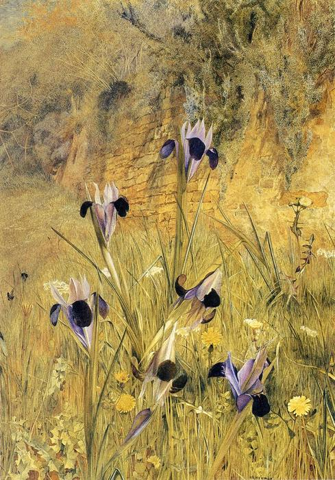 Irises in the Garden, Watercolour by Henry Roderick Newman (1833-1918, United States)