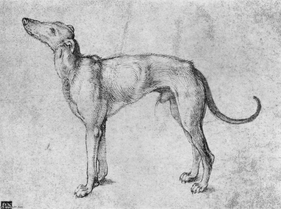 Greyhound by Albrecht Durer (1471-1528, Italy) | Oil Painting | WahooArt.com