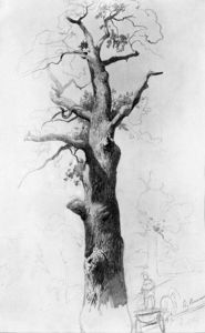 Fyodor Alexandrovich Vasilyev - The Trunk of an Old Oak