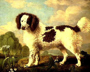 George Stubbs - Brown and White Norfolk or Water Spaniel