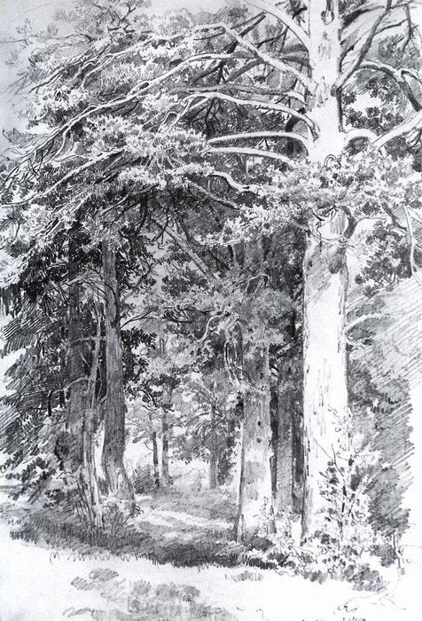 Pine forest, 1889 by Ivan Ivanovich Shishkin (1832-1898, Russia) | Famous Paintings Reproductions | WahooArt.com