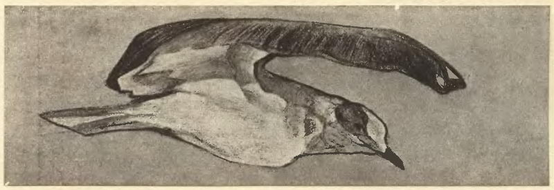 Order Paintings Reproductions | Seagull, 1901 by Nicholas Roerich (1874-1947, Russia) | WahooArt.com