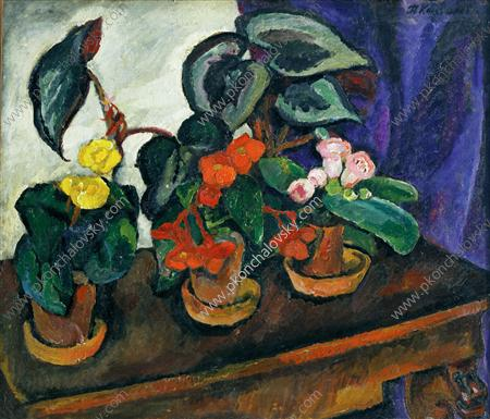 Order Painting Copy : Still Life. Begonias., 1911 by Pyotr Konchalovsky (1876-1956, Russia) | WahooArt.com