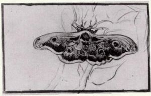 Vincent Van Gogh - Death-s Head Moth