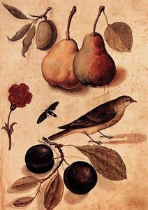 Ulisse Aldrovandi - Specimens of Nature