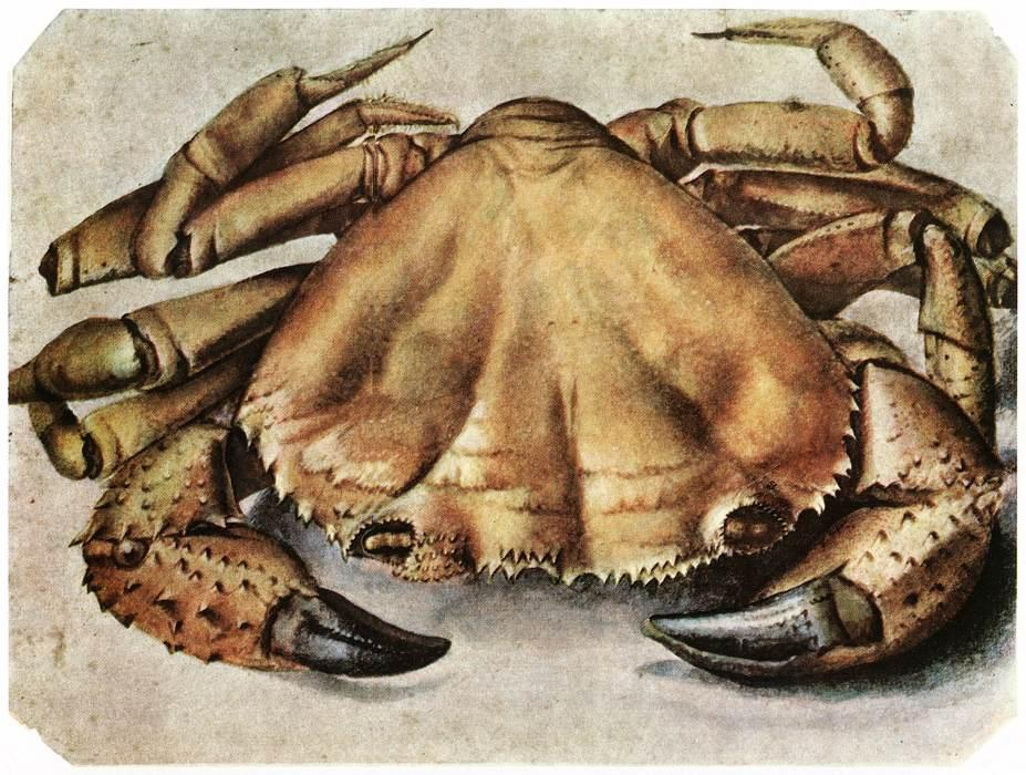 Lobster, Watercolour by Albrecht Durer (1471-1528, Italy)