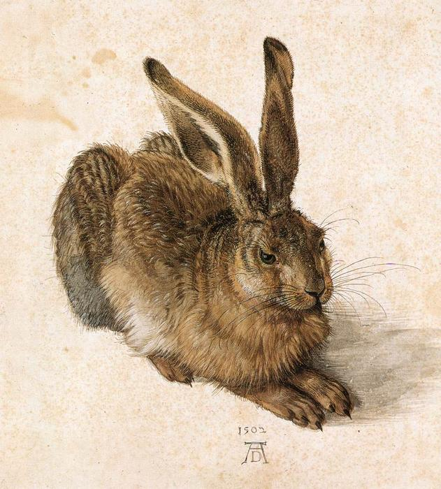 Young Hare, Watercolour by Albrecht Durer (1471-1528, Italy)