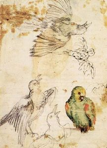 Giovanni Da Udine - Study of a Parrot and Other Birds