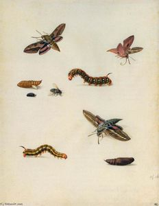 Herman Henstenburgh - Insects