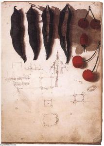Leonardo Da Vinci - Fruit, vegetables and other studies
