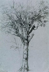 Cesare Da Sesto - Study of a Tree