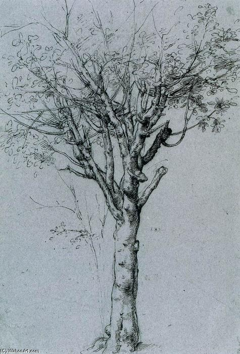 Order Museum Quality Reproductions : Study of a Tree by Cesare Da Sesto (1477-1523, Italy) | WahooArt.com