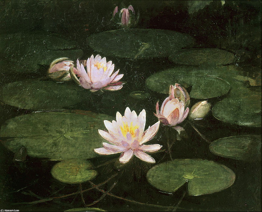 Waterlilies, 1884 by Abbott Handerson Thayer (1849-1921, United States) | Famous Paintings Reproductions | WahooArt.com