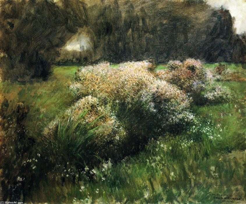 Wild Asters, Study, Oil On Canvas by Dennis Miller Bunker (1861-1890, United States)