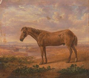 Charles Towne - Old Billy, A Draught Horse, Aged - (62)