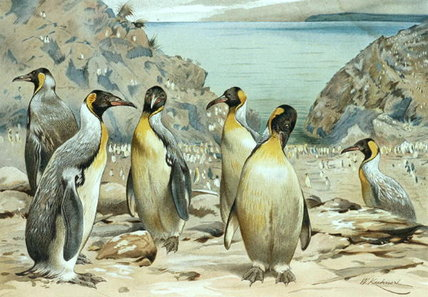 Emperor Penguin by Friedrich Wilhelm Kuhnert (1865-1926, Poland) | Paintings Reproductions Friedrich Wilhelm Kuhnert | WahooArt.com