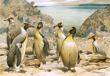 Giant Penguins by Friedrich Wilhelm Kuhnert (1865-1926, Poland) | Famous Paintings Reproductions | WahooArt.com