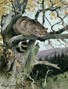 Friedrich Wilhelm Kuhnert - Wildcat In A Tree