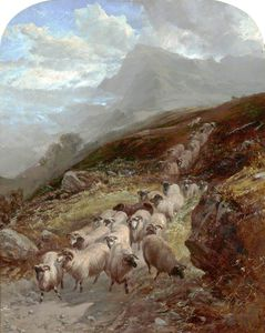 William Watson - Sheep On A Mountainside