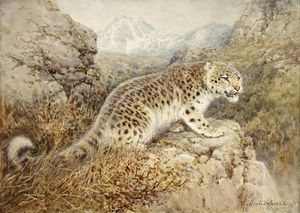 William Arnold Woodhouse - Snow Leopard
