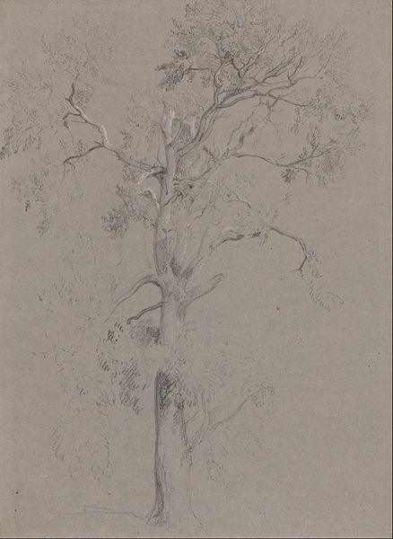 Buy Museum Art Reproductions | Ash Tree In Ashstead Park by Peter De Wint (1784-1849, United Kingdom) | WahooArt.com