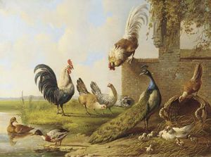 Albertus Verhoesen - Poultry And A Peacock By A Ruin -