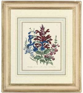 Jane Loudon - Flower Studies From The Ladies' Flower-garden Of Ornamental Annuals