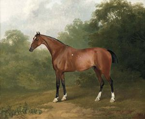 Sawrey Gilpin - A Bay Horse In A Wooded Landscape