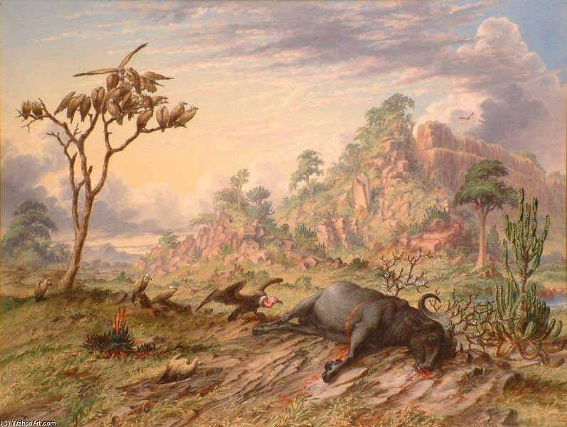 Dead Buffalo, King Vulture And Common Vultures by Thomas Baines (1820-1875, United Kingdom)