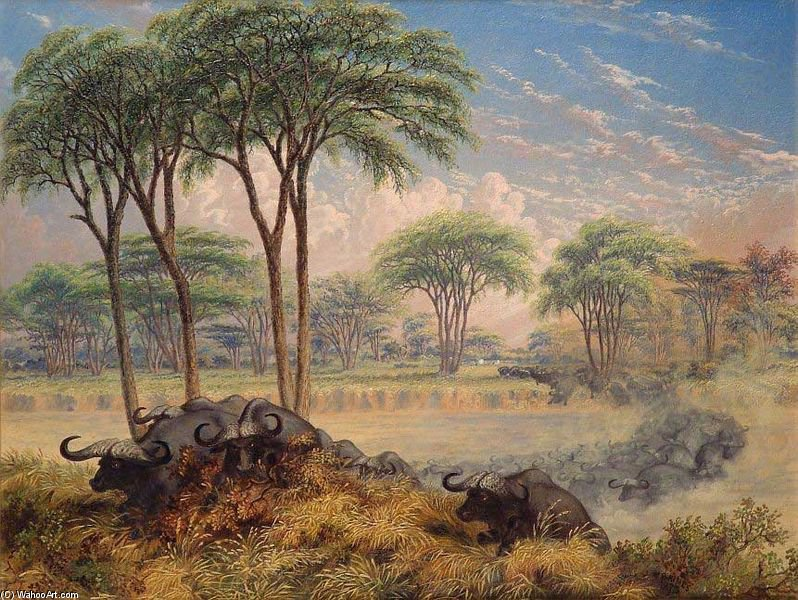 Herd Of Buffalo Chased Across The Macloutsie River by Thomas Baines (1820-1875, United Kingdom)