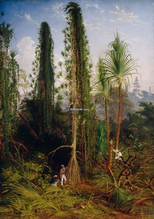 Pandanus by Thomas Baines (1820-1875, United Kingdom)