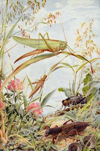 Louis Fairfax Muckley - Musical Insects