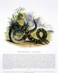 Josiah Wood Whymper - The Rattle-snake Educational
