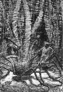 Alphonse Marie Adolphe De Neuville - The Spider Crab