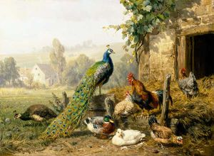 Carl Jutz - Chicken Run With Peacock
