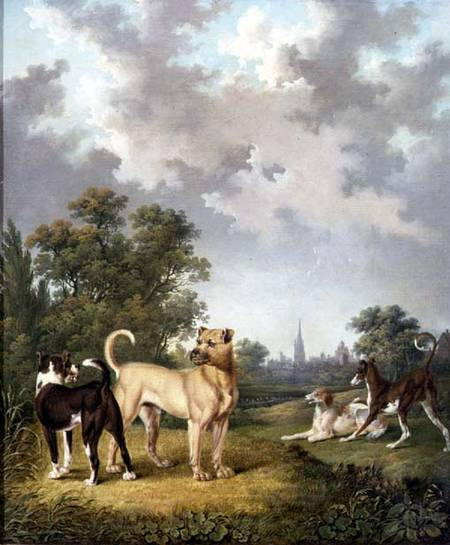 Dogs In A Landscape by Charles Towne (1763-1854, United Kingdom)