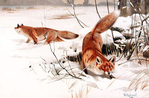 Friedrich Wilhelm Kuhnert - Common Foxes In The Snow