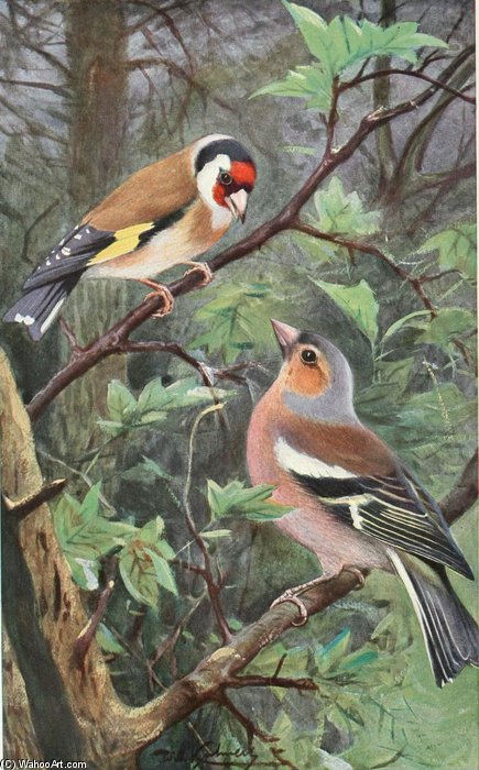 Goldfinch And Chaffinch by Friedrich Wilhelm Kuhnert (1865-1926, Poland) | WahooArt.com