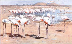 Friedrich Wilhelm Kuhnert - Greater Flamingo