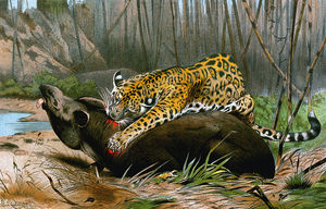 Order Museum Quality Reproductions : Jaguar Killing Tapir by Friedrich Wilhelm Kuhnert (1865-1926, Poland) | WahooArt.com