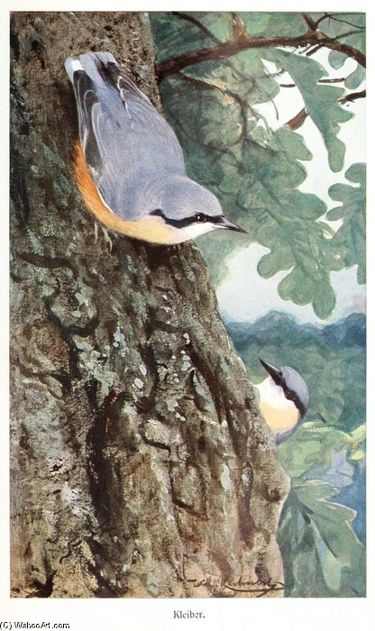 Nuthatch by Friedrich Wilhelm Kuhnert (1865-1926, Poland) | Famous Paintings Reproductions | WahooArt.com
