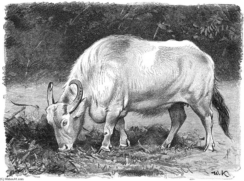 Water Buffalo by Friedrich Wilhelm Kuhnert (1865-1926, Poland) | Painting Copy | WahooArt.com
