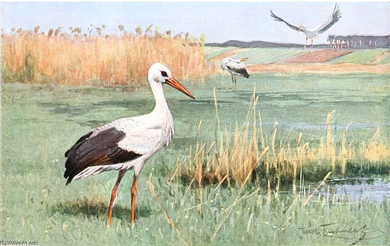 White Stork by Friedrich Wilhelm Kuhnert (1865-1926, Poland) | Museum Quality Reproductions | WahooArt.com