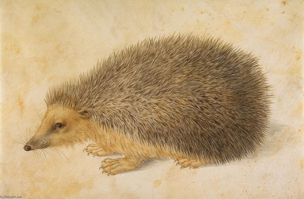 A Hedgehog by Hans Hoffmann (1530-1591, India) | Famous Paintings Reproductions | WahooArt.com