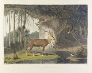 Samuel Daniell - A Picturesque Illustration Of The Scenery, Animals, And Native Inhabitants, Of The Island Of Ceylon