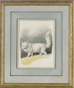 Samuel Howitt - A Persian Cat