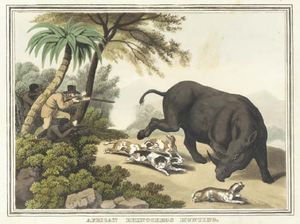 Samuel Howitt - African Rhinoceros Hunting, From Foreign Field Sports