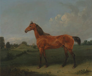 Edmund Bristow - A Bay Horse In A Field